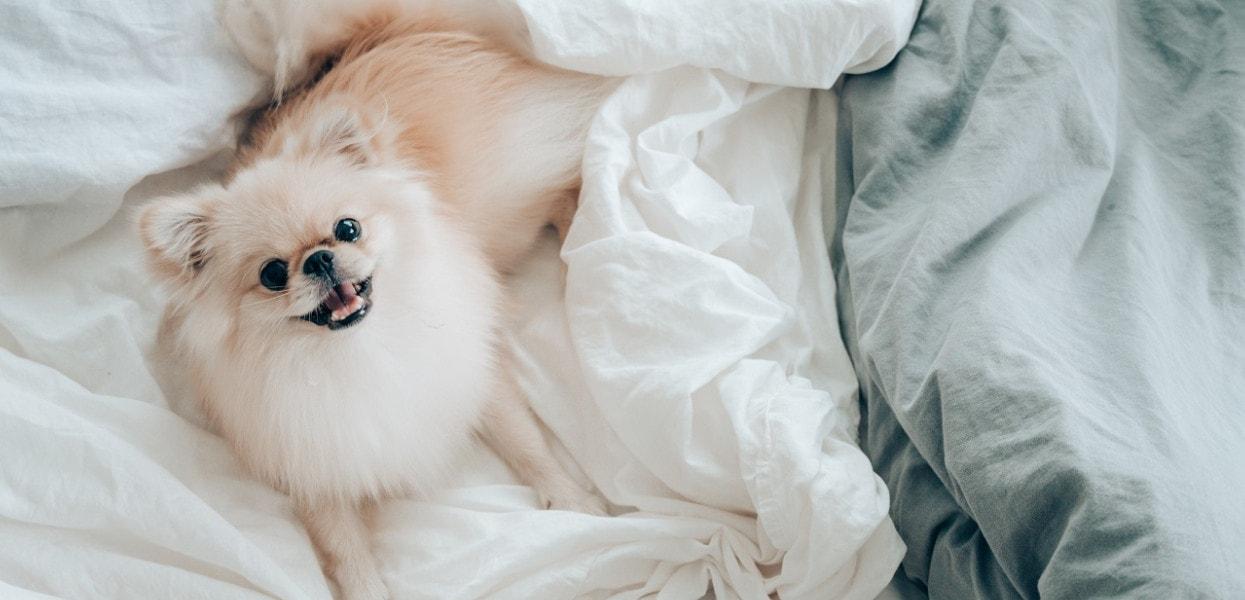 Czy zwierzęta mogą spać w sypialni?
